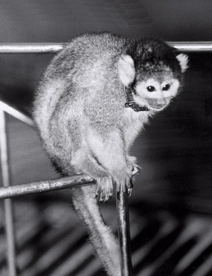 Monkey Baker