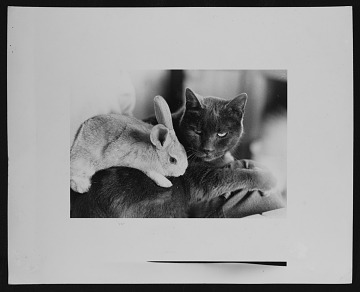 thumbnail image for Anne Arnold's cat, Stubbs, and one of her bunnies in Maine