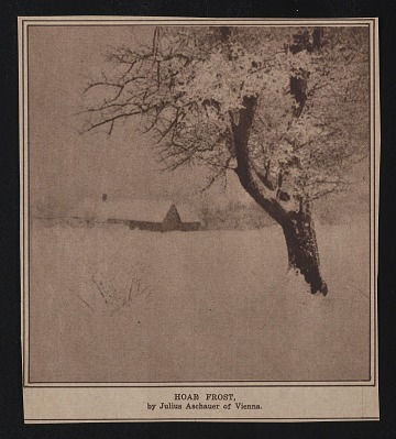 "thumbnail image for Newspaper photo of snowy tree with caption ""Hoar Frost"""