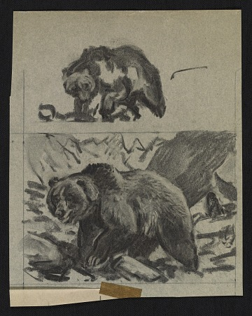 thumbnail image for Sketches of bears