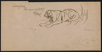 thumbnail image for Sketch of a tiger