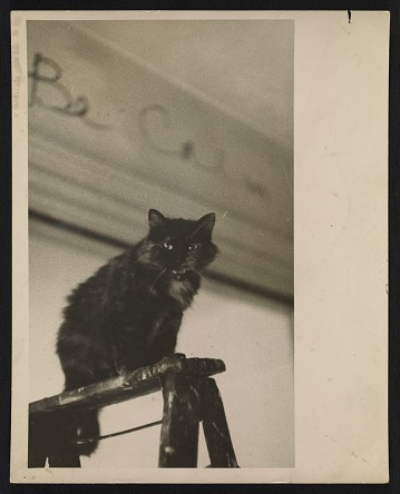 thumbnail image for Jay DeFeo's cat, Pooh, in her studio