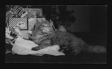 thumbnail image for Photograph of Tuffy the cat