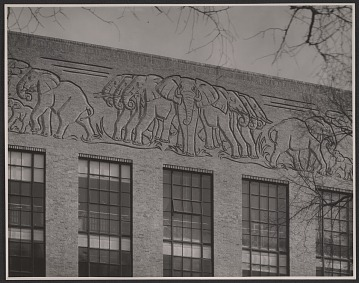 thumbnail image for Elephant frieze on the biology lab at Harvard