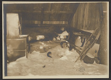 thumbnail image for Abbott Thayer in his sleeping hut with his dog Hauskuld