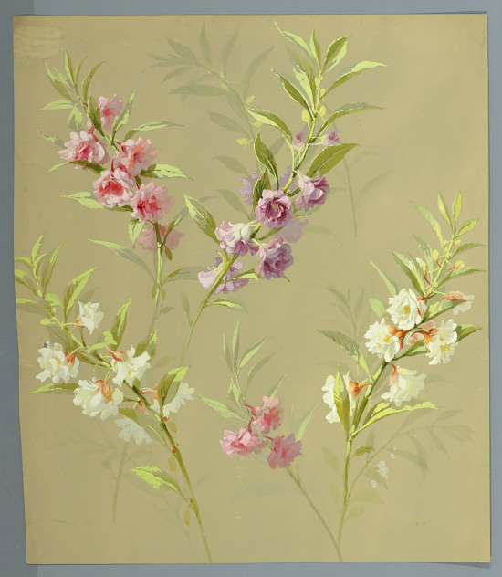 image for Sprays of orchids