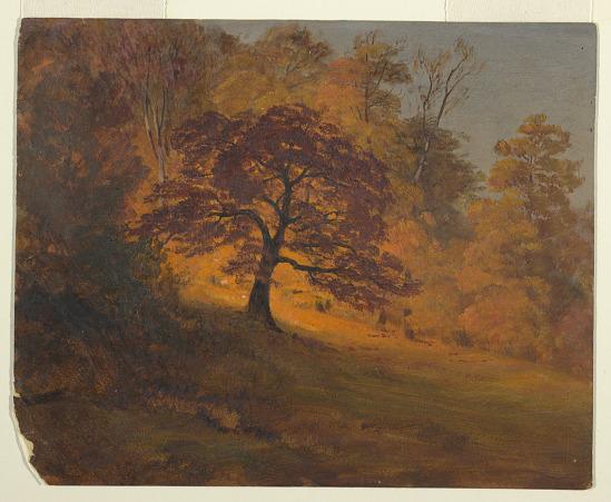 image for Autumn Foliage
