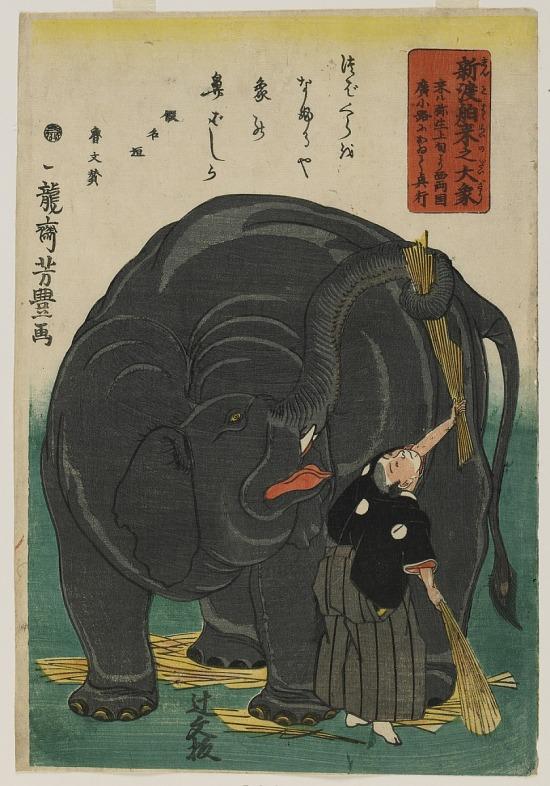 image for Recently Imported Large Elephant