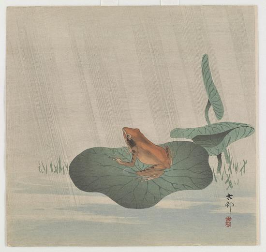 image for Frog on lotus leaf