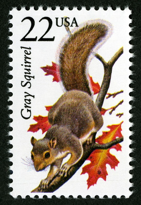image for 22c Gray Squirrel single