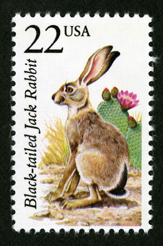 Jack Rabbit Usa >> 22c Black Tailed Jack Rabbit Single Smithsonian Institution
