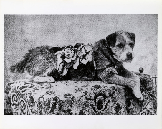 image for Photograph of Owney the dog