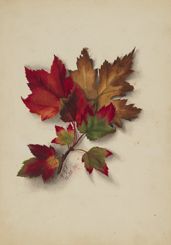 image for Untitled (Autumn Leaves)