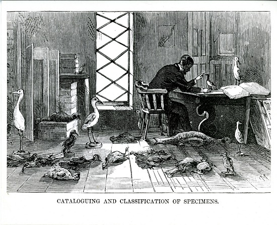 image for Ornithologist Cataloging Specimens, Natural History Laboratory, in the Smithsonian Institution Building