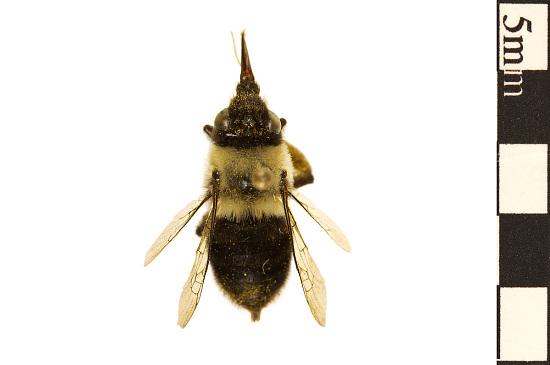 Chimney Bee