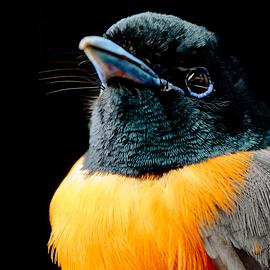 Migratory Bird Center