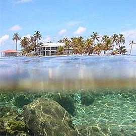 Caribbean Coral Reef Ecosystems Program