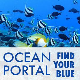 The Ocean Blog