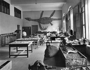 Paleontology Laboratory, USNM, by Unknown, 1913, Smithsonian Archives - History Div, 2002-21697.