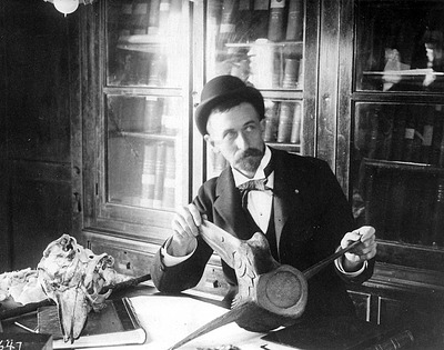 Dr. Frederick True, mammalogist, holds a specimen in his lab at the United States National Museum, c