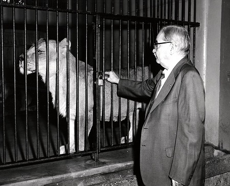 Dr. William M. Mann with Lion in Cage at National Zoo