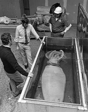 Mike Sweeney and Clyde F. E. Roper Examining Giant Squid Specimen