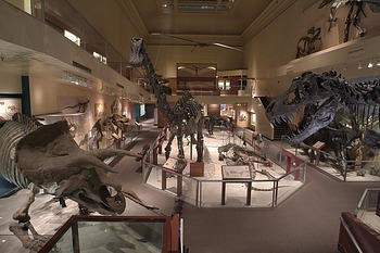 Dinosaur Hall, NMNH