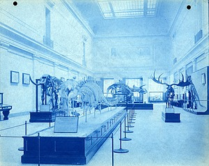 Vertebrate Paleontology Exhibit, East Central Hall, First Floor, Natural History Building