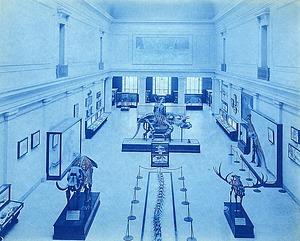 Vertebrate Paleontology Hall, USNM