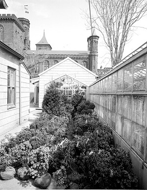 Plants Stored in the South Yard of the Smithsonian Institution Building, or Castle