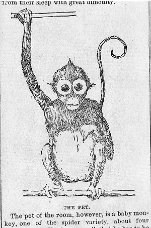 Drawing of a Monkey at the NZP, by Unknown, Smithsonian Archives - History Div, 77-11428.