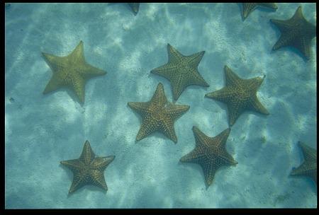 Underwater Views of Starfish, Panama, STRI