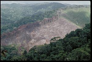Documentation of Deforestation, Panama, STRI