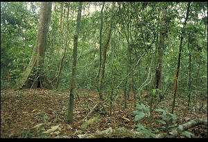 Forest Dynamic Project, Panama, STRI