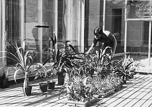 Robert Read Tending Roof-top Greenhouse