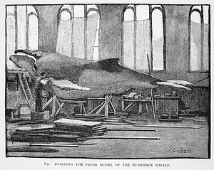Engraving of Humpback Whale Model