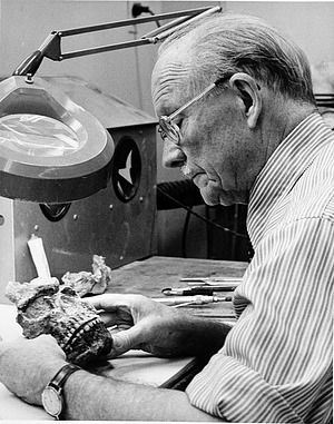 T. Dale Stewart at Work, by Dougherty, Harold E, 1983, Smithsonian Archives - History Div, 95-250.