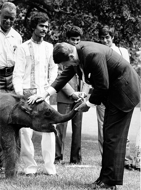 National Zoological Park Baby Elephant Jayathu Receives Pat from President Ronald Reagan