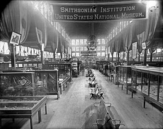Smithsonian Exhibit at the 1888 Cincinnati, Ohio, Exposition