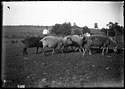 Unidentified Farm, 1880, Smithsonian Institution Archives, SIA Acc. 11-006 [MAH-4785].