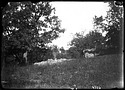 Unidentified Farm, 1880, Smithsonian Institution Archives, SIA Acc. 11-006 [MAH-4786].