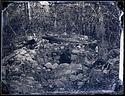 Rocks in a Forested Area, 1880, Smithsonian Institution Archives, SIA Acc. 11-007 [MNH-1144].