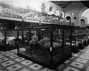 Mammals in A&I South Hall