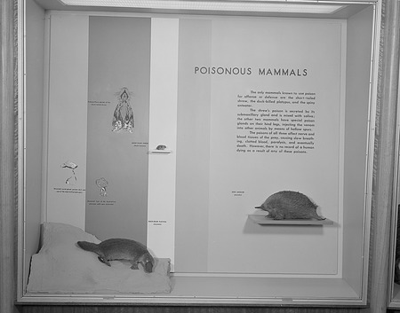 Poisonous Mammals Exhibit, Hall of Mammals, National Museum of Natural History