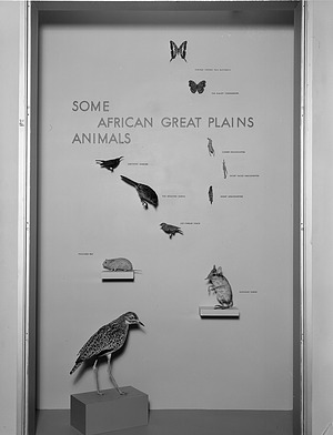 Some African Great Plains Animals Exhibit, Hall of Mammals