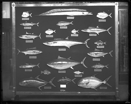 Department of Fishes Exhibit, 1880, Smithsonian Institution Archives, SIA Acc. 11-007 [MNH-2756].