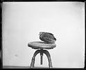Live Bird Specimen on Stool, 1880, Smithsonian Institution Archives, SIA Acc. 11-007 [MNH-3404].