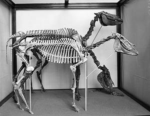 Paleontology Exhibit, Hagerman Horses