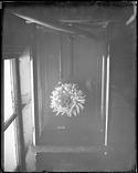 Sea Anemone Specimen, 1880, Smithsonian Institution Archives, SIA Acc. 11-007 [MNH-3468].