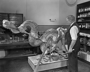 Edgar G. Laybourne, Exhibits Specialist, with Model of a Python